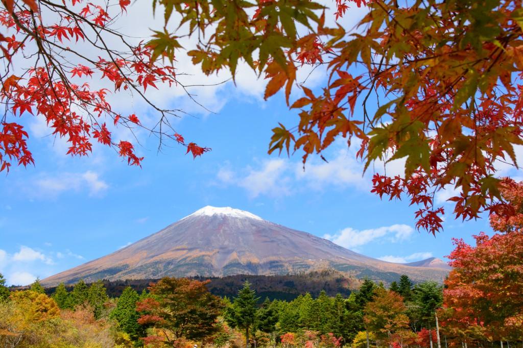 スカイラインの富士山と紅葉