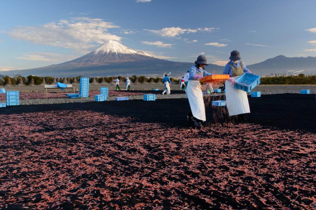 秋の桜えび干しと富士山
