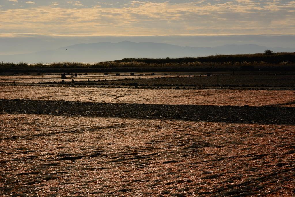 朝日の逆光に照らされる桜えびの絨毯。秋っぽく撮れたかな