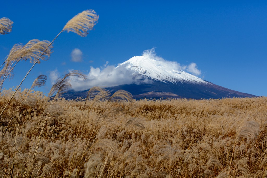 ススキ野原の富士山