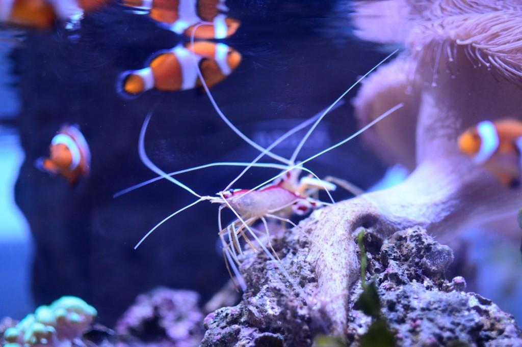 色々な熱帯魚も