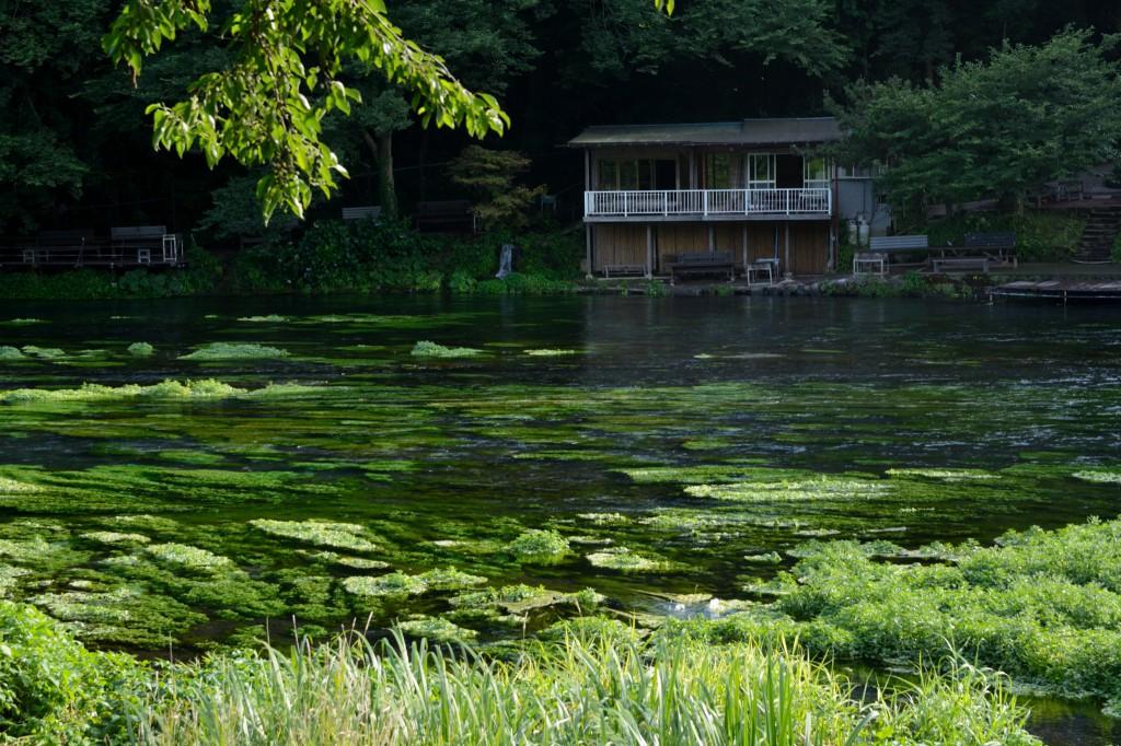 柿田川と家