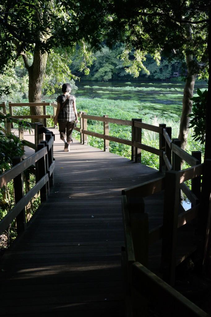 柿田川と遊歩道
