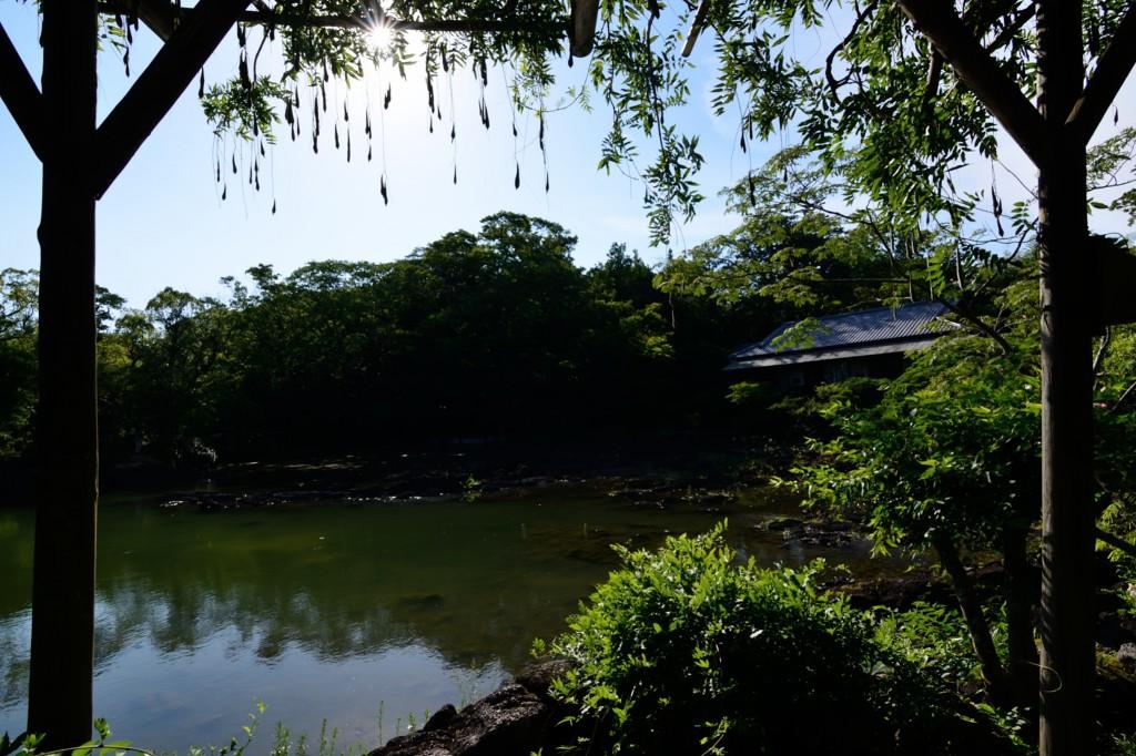 小浜池と楽寿館