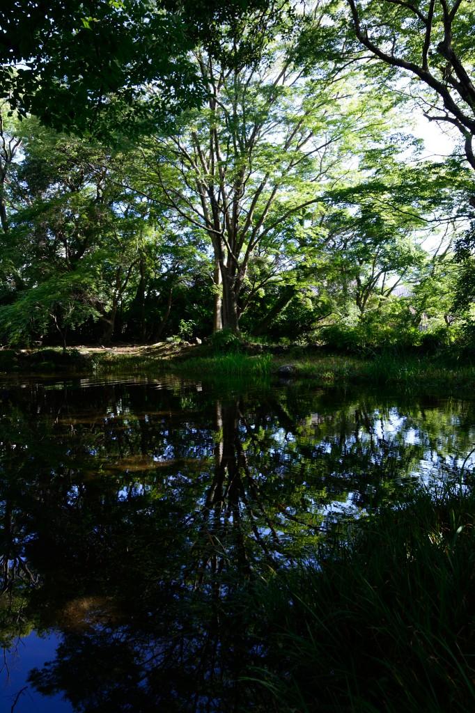 楽寿園の池と木