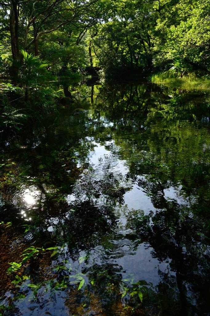 楽寿園の池